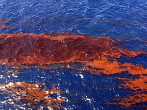 Gulf Oil Spill: oil on water